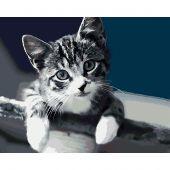 Kit de peinture par numéro - Wizardi - Tendresse de chat