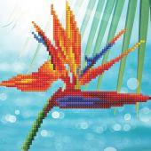 Kit de broderie Diamant - Diamond Art - Oiseau de paradis