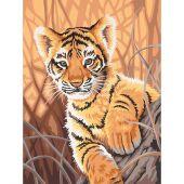 Kit de peinture par numéro - Dimensions - Bébé tigre