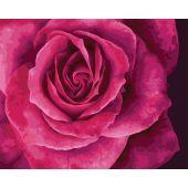 Kit de peinture par numéro - Wizardi - Belle rose
