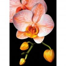 Kit de broderie Diamant - Collection d'Art - Orchidée gracieuse