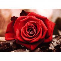 Kit de broderie Diamant - Collection d'Art - Rose rouge