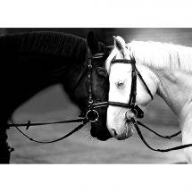 Kit de broderie Diamant - Collection d'Art - Chevaux blanc et noir