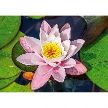 Kit de broderie Diamant - Collection d'Art - Lotus magique