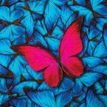 Carte broderie Diamant - Crystal Art D.I.Y - Papillon