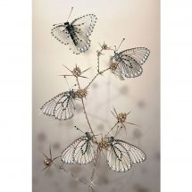 Broderie Crystal  - Charivna Mit - Papillons