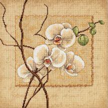 Kit point de croix - Dimensions - Orchidées Orientales