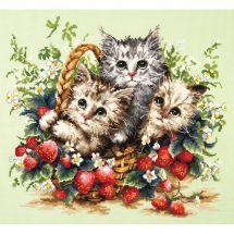 Kit point de croix - Magic Needle - Adorables chatons