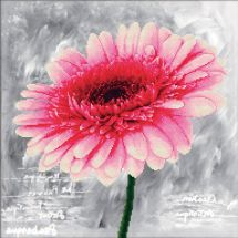 Kit point de croix - Needleart World - Dahlia rose