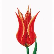 Kit point de croix - Théa Gouverneur - Tulipe Lily