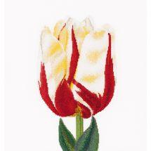 Kit point de croix - Théa Gouverneur - Tulipe Flamed Single
