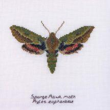 Kit point de croix - Théa Gouverneur - Papillon euphorbe