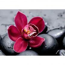 Kit de broderie Diamant - Wizardi - Orchidée royale