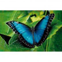 Kit de broderie Diamant - Wizardi - Papillon bleu