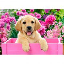 Kit de broderie Diamant - Wizardi - Chiot labrador dans une caisse rose
