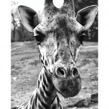 Kit de peinture par numéro - Wizardi - Girafe curieuse